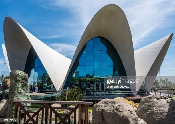 los turistas esperan afuera de la entrada al oceanografic en valencia - valencia fotografías e imágenes de stock