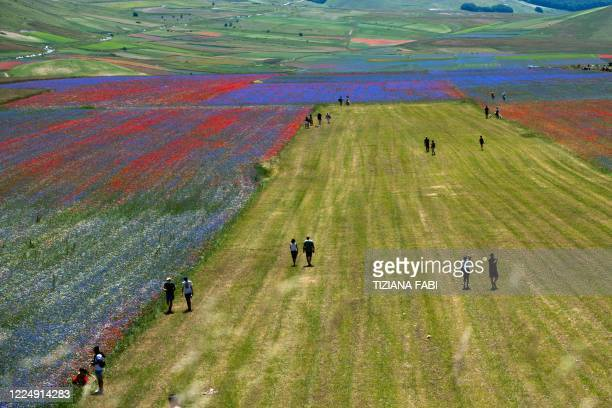 Tourists walk in the middle of blooming flowers and lentil fields in Castelluccio, a small village in central Italy's Umbria region on July 6, 2020