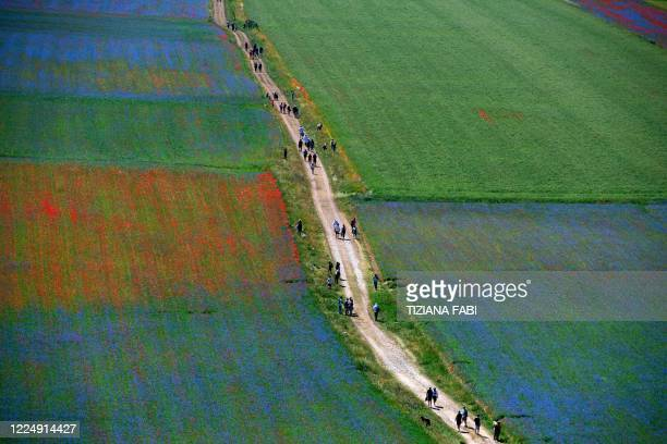 Tourists walk in the middle of blooming flowers and lentil fields in Castelluccio, a small village in central Italy's Umbria region on July 6, 2020.