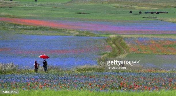 Tourists walk in the middle of flowers in bloom including lentil fields and poppies near Castelluccio a small village in central Italys Umbria region...