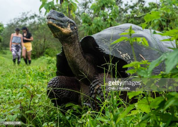 Tourists walk near giant tortoises in the highlands of Santa Cruz island on January 18 2019 in Galapagos Islands Ecuador A growing human population...