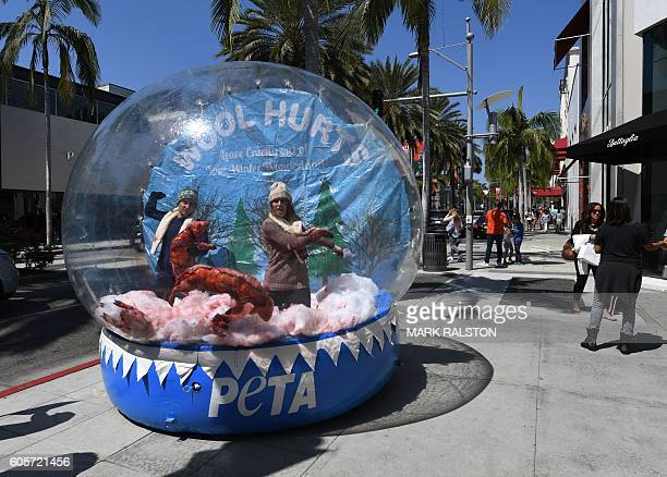Tourists walk past a life-size snow globe containing members of the PETA animal rights group as they protest against the wool industry and the...