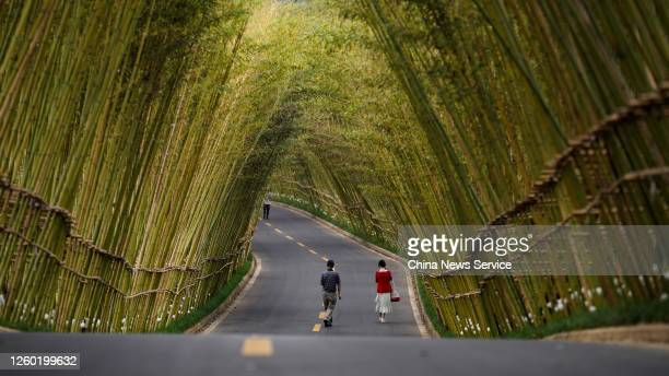 Tourists walk though a bamboo forest on July 26, 2020 in Kunming, Yunan Province of China.