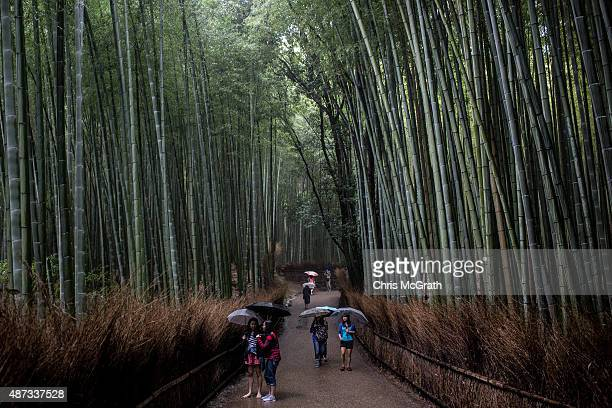 Tourists walk through the famous Sagano Bamboo Forest on September 6 2015 in Kyoto Japan The famous city of Kyoto is going through a massive tourism...