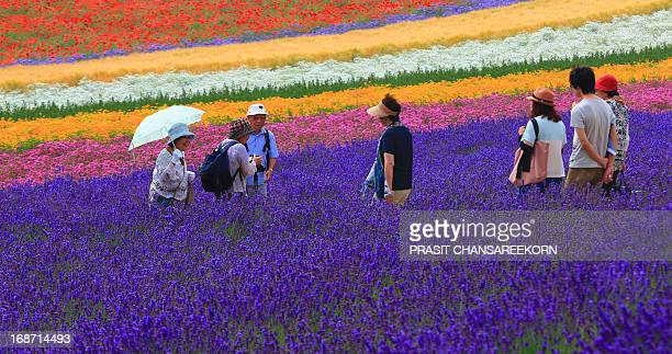 CONTENT] Tourists walking into a colourful flower fields of Farm Tomita at Furano Hokkaido Japan