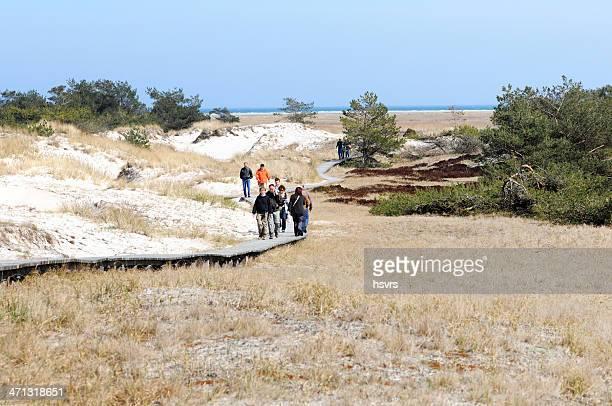 touristes marcher sur bois darsser ensemble de sentier pédestre parc national (allemagne - fischland darss zingst photos et images de collection