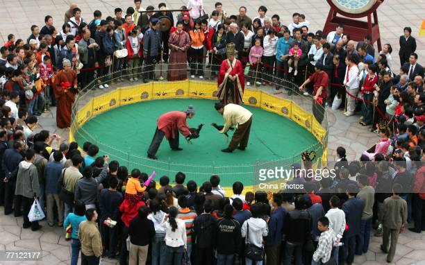 Tourists watch a cock fighting show during celebrations to mark National Day October 1 2007 in Xian of Shaanxi Province China The weeklong National...