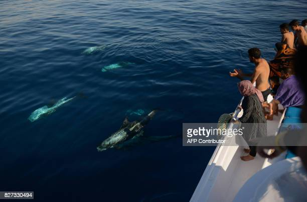 Tourists watch dolphins in Egyptian Red Sea resort of Sharm elSheikh on August 7 2017 Saudi Arabian billionaire Prince Alwaleed bin Talal is to...