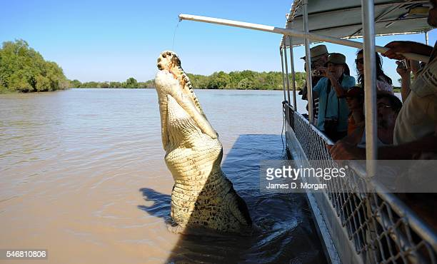 Tourists watch from a boat on June 11 2008 in Darwin Australia Tourists can go out on tours such as the jumping crocodile tours seen here just an...