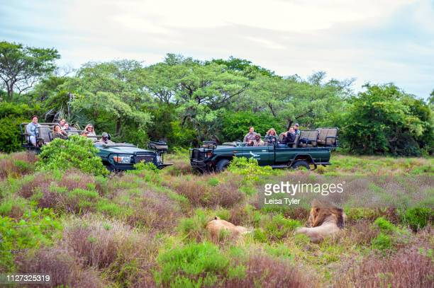 Tourists watch two wild lions while on safari at the Phinda Private Game Reserve, an andBeyond owned nature reserve in eastern South Africa. Hotel...