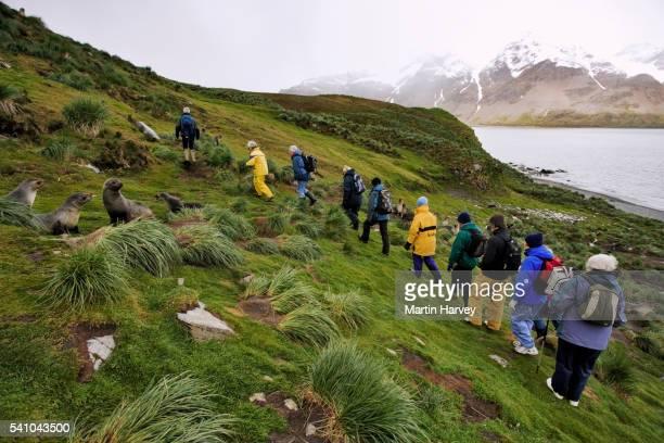 Tourists Watching Antarctic Fur Seals