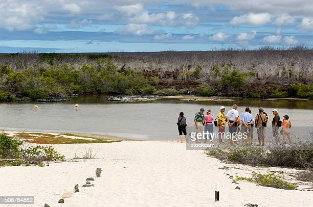 tourists watching flamingos in lake, galapagos islands - santa cruz island galapagos islands stock pictures, royalty-free photos & images