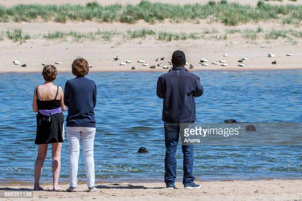 Tourists watching grey seals / gray seals swimming in the Ythan Estuary, Sands of Forvie, Newburgh, Aberdeenshire, Scotland.
