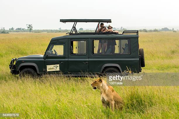 Tourists watching Lioness very close