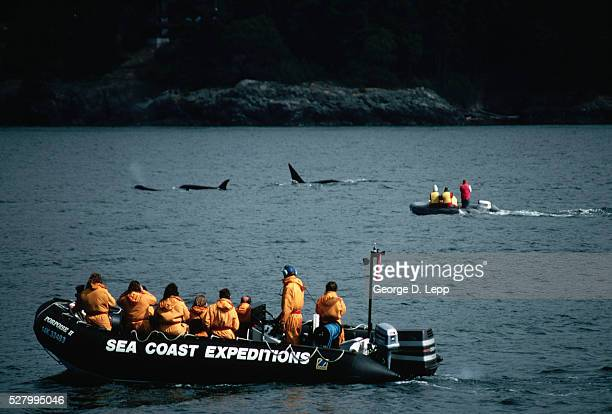 Tourists Watching Orca Whales
