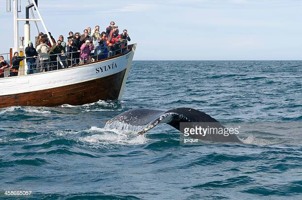 Tourists whale watching in Iceland