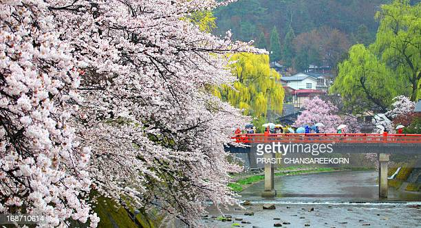 CONTENT] Tourists with cherry blossom or Sakura at Takayama Japan