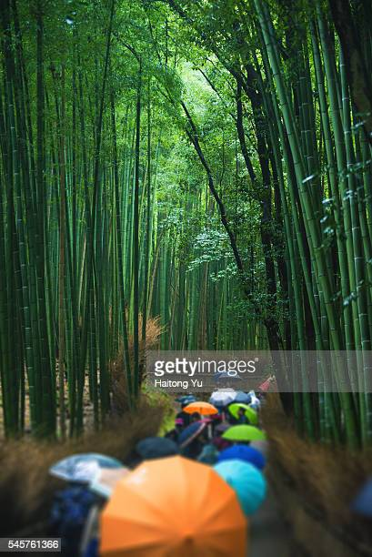 Tourists with umbrellas walking in bamboo forest, Arashiyama, Kyoto, Japan