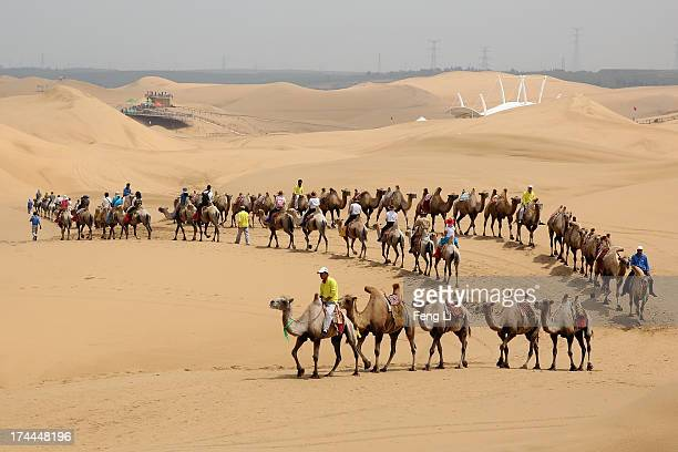Toursits ride camels on a tour of Xiangshawan Desert also called Sounding Sand Desert on July 18 2013 in Ordos of Inner Mongolia Autonomous Region...