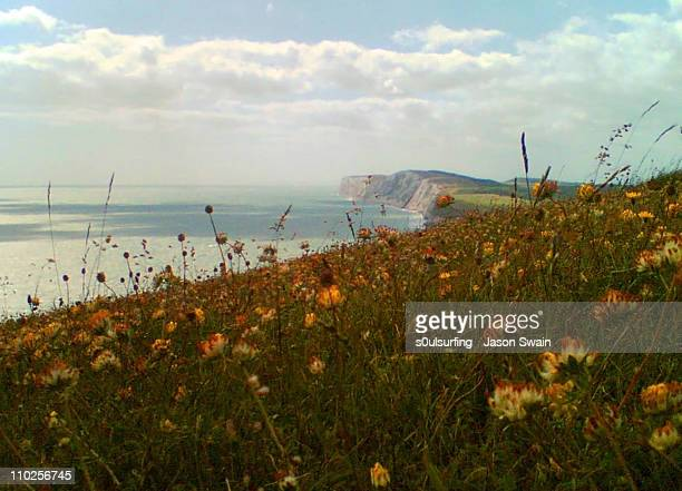 towards tennyson down - s0ulsurfing stock pictures, royalty-free photos & images