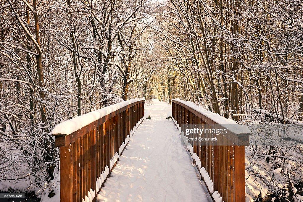 Towards The Winter Wonderland : Stock Photo
