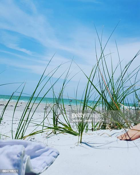 towel by grass at beach against sky - clearwater florida stock pictures, royalty-free photos & images