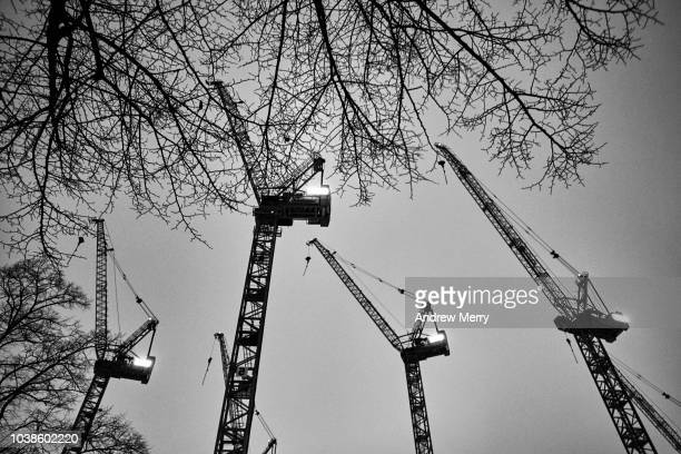 Tower Cranes at night with bare winter tree, Berlin, Germany