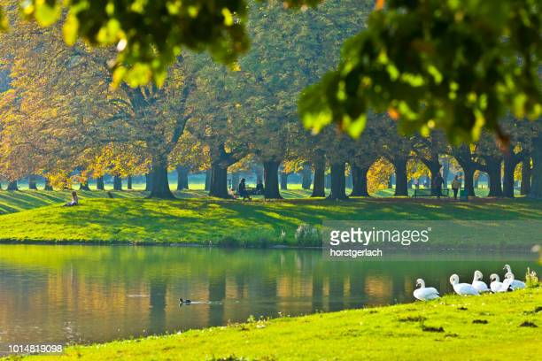 town forest of cologne in autumn light - north rhine westphalia stock pictures, royalty-free photos & images