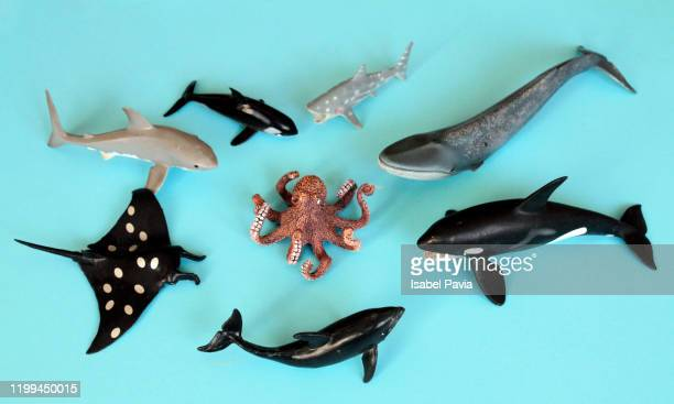 toy animals. flat lay - shark stock pictures, royalty-free photos & images