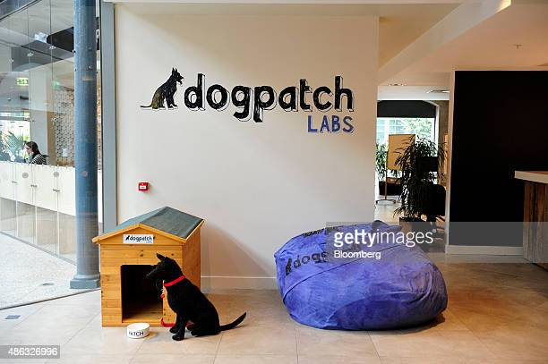 Toy dog sits beside a kennel at the entrance to Dogpatch Labs at the CHQ shopping mall in Dublin, Ireland, on Thursday, Sept. 3, 2015. Former...