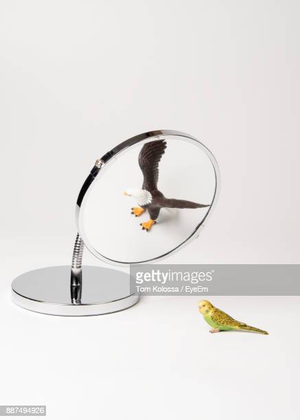 Toy Eagle Reflecting In Mirror By Toy Parakeet Against White Background