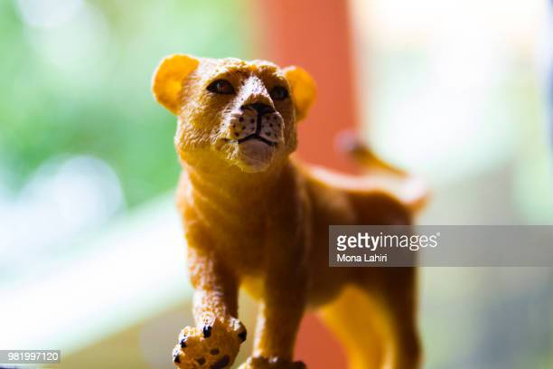 toy lioness - fossa stock photos and pictures