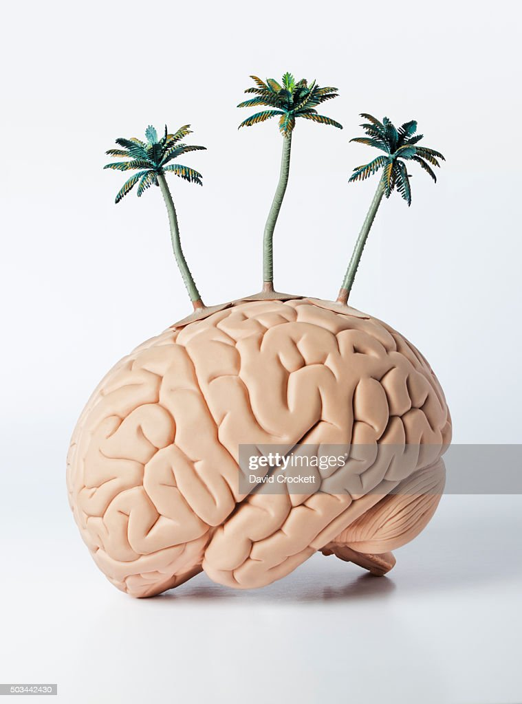 Toy Palm Trees On A Human Brain Model Stock Photo Getty Images