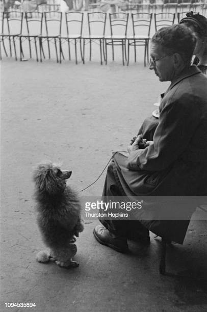 A Toy Poodle and its owner at Crufts dog show held at the Grand Hall Olympia London 8th9th February 1952 Original Publication Picture Post Dog Show...