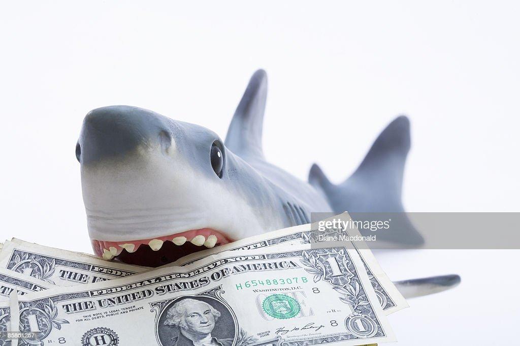 A toy shark holding U.S. dollar bills : Stock-Foto