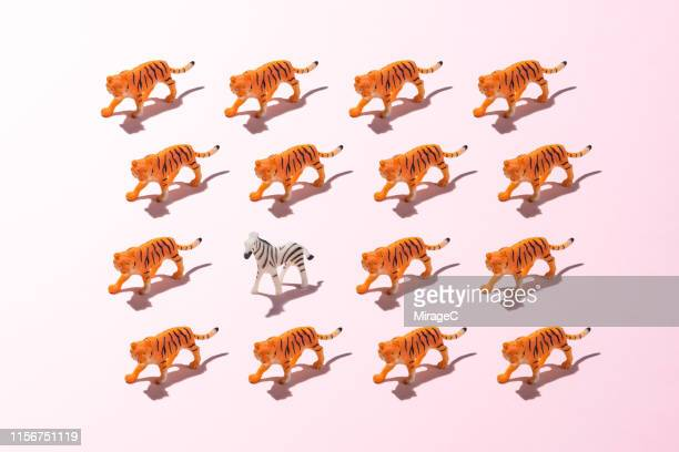a toy zebra against a crowd of tigers - animal behaviour stock pictures, royalty-free photos & images