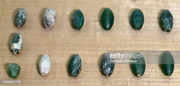 "TPebble-shaped ""kirikodama"" ornaments made of glass that were unearthed are seen on Okinoshima island at Munakata Taksha Shrine on March 1, 2020 in..."