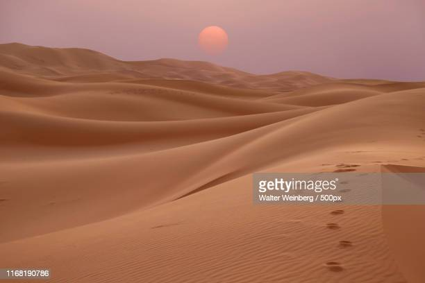 traces in the sand - heatwave stock pictures, royalty-free photos & images