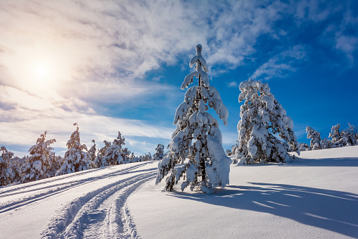 Traces of a snowmobile in the winter forest. Beautiful winter landscape - gettyimageskorea