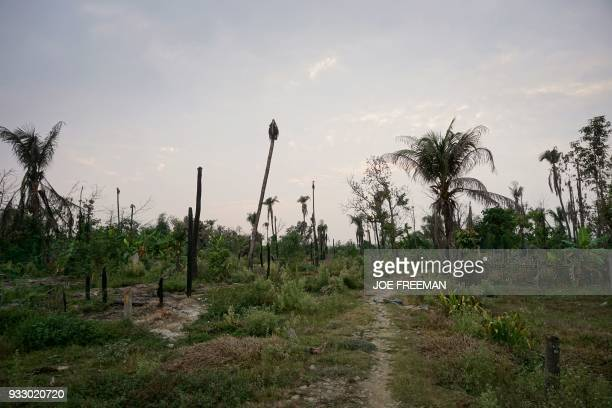 Traces of burnt wooden structures and vegetation of what appears to be a former village are seen in Maungdaw in Rakhine state on March 17 near the...