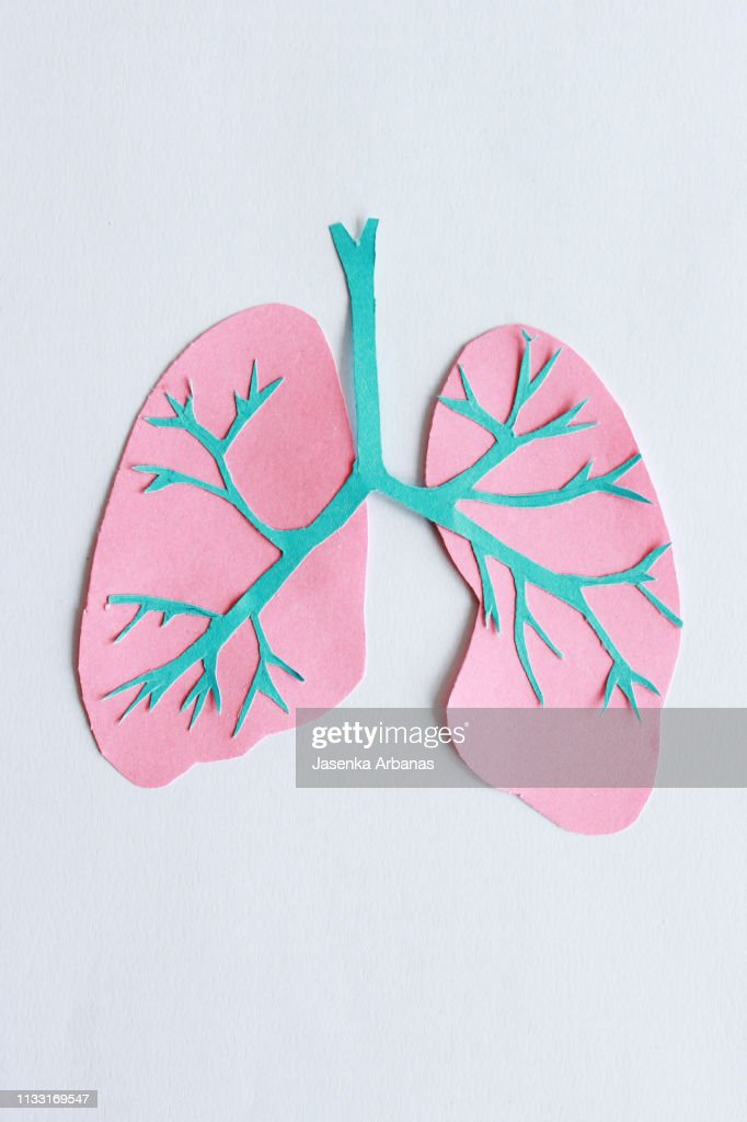 Trachea and lungs : Stock Photo