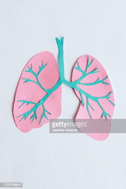 trachea and lungs - lung stock pictures, royalty-free photos & images