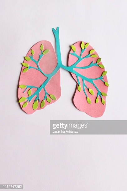 trachea and lungs - organos internos del cuerpo humano fotografías e imágenes de stock