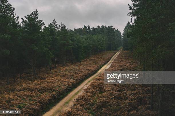 track in autumnal forest - month stock pictures, royalty-free photos & images