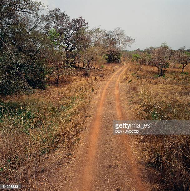 Track in the wooded savannah Comoe National Park Ivory Coast