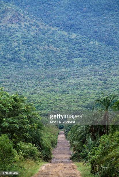 A track in Virunga National Park Democratic Republic of the Congo
