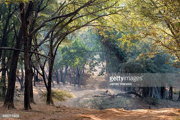 track through bengal tiger forest - ranthambore national park stock pictures, royalty-free photos & images