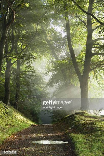 track through misty woods - single track stock pictures, royalty-free photos & images