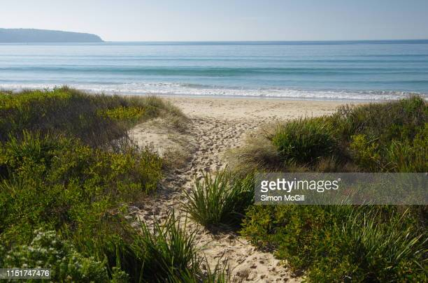 track through the sand dunes to merimbula beach, new south wales, australia - eroded stock pictures, royalty-free photos & images