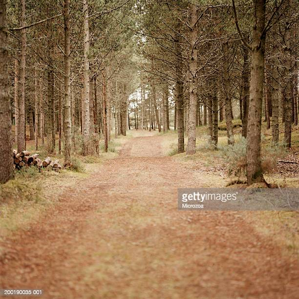 track through woodland - microzoa stock pictures, royalty-free photos & images